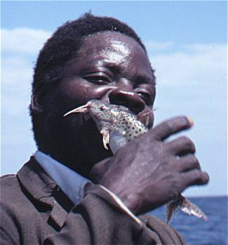 A fisherman bites the spines from a Synodontis njassae